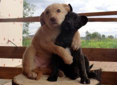 Анима, ветеринарная клиника