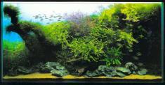 Аквариф, студия аквариумного дизайна