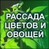 Рассада цветов в Рязани, рассада помидоров, рассада огурцов и овощей