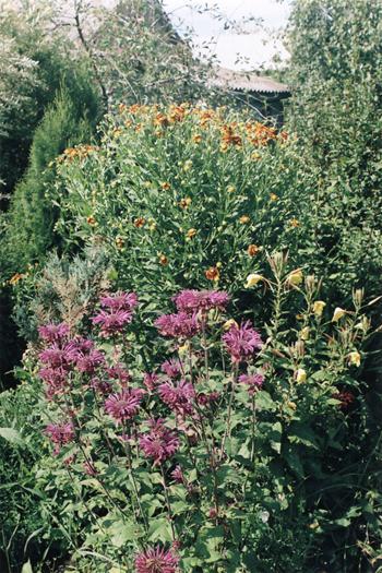 Манарды - любимые цветы Петра Первого