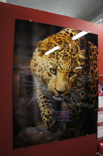 панно с фотопечатью Леопард