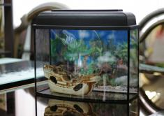 Аквариумы - аквариум-телевизор