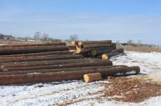 На изготовление срубов идет только крепкий, здоровый лес