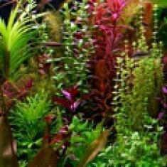 Живой сад