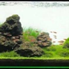 Природный аквариум